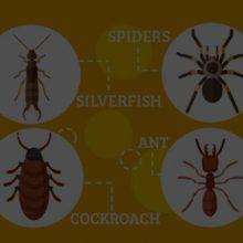 General-Pest-Control-Mackay-1